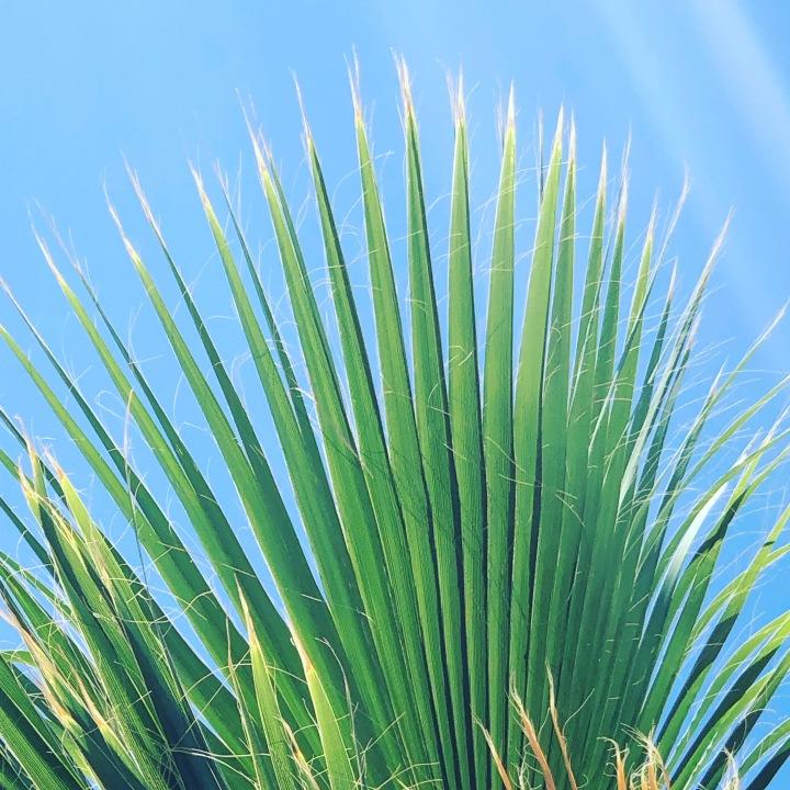 #palm #blueskies
