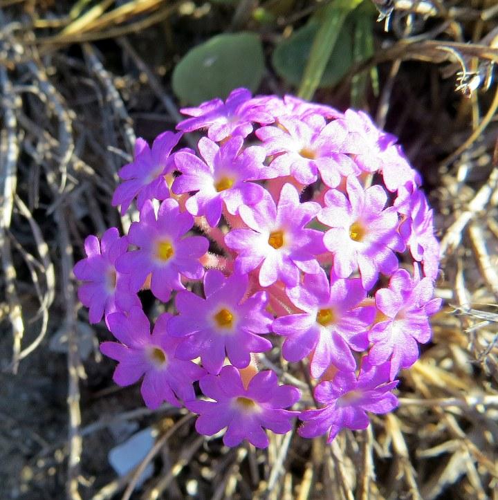 #wildflowers 1