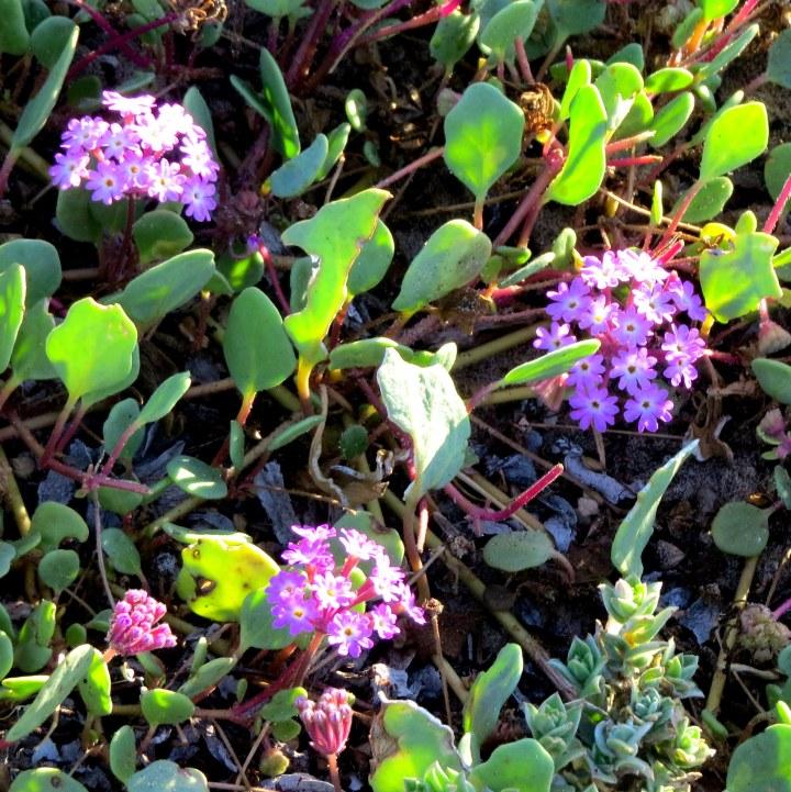 #wildflowers 2