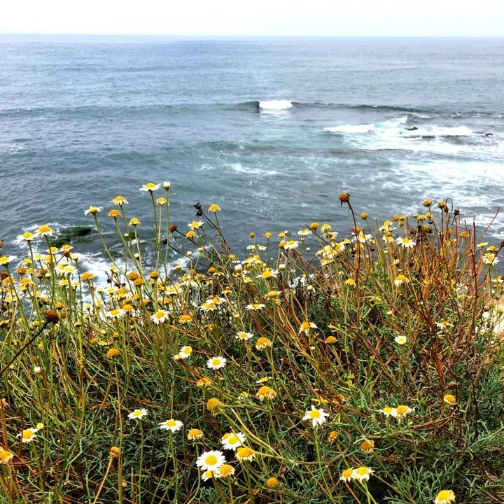 #wildflowers 5