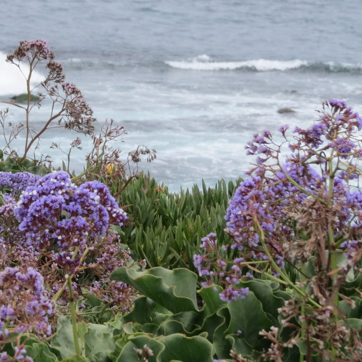 #wildflowers #waves